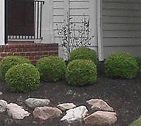 Shrub Pruning by A Kut Above Beavercreek, Ohio